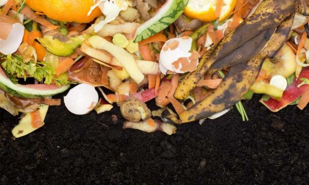 How to Start Composting In Your Apartment Without Stinking Up The Place