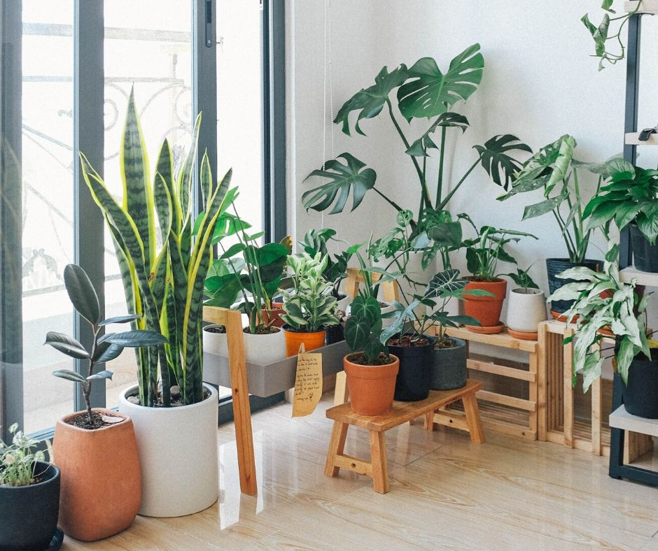 Best Hard to Kill Air Purifying Plants You Need in Your Home