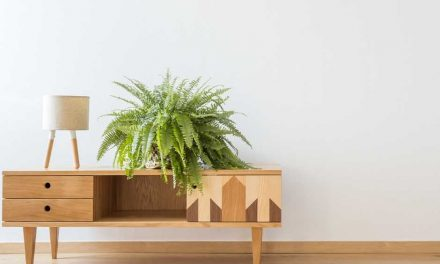 4 Indoor Ferns That Are Perfect for Home Decor