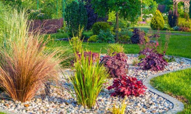 8 Landscaping Tips for Beginners To Start