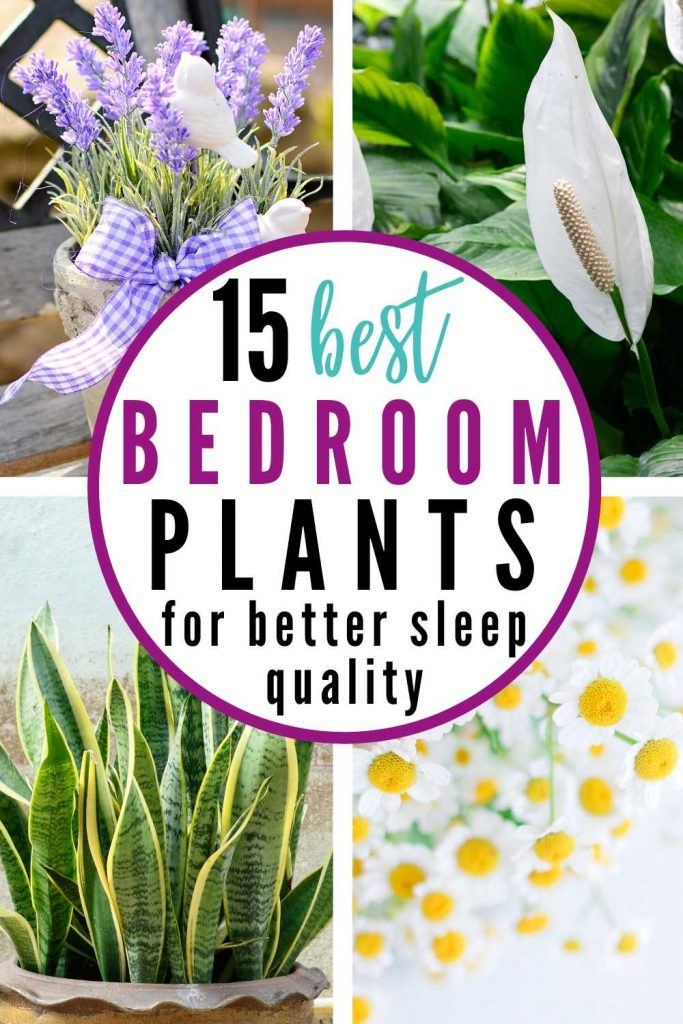 What are the best plants for the bedroom? Here are 15 of the best bedroom plants to have for better sleep quality! Click to read more gardening tips, home decor, home design, bedroom plants decor small spaces, bedroom plants decor ideas, bedroom plants ideas, bedroom plants bohemian, lifestyle tips, lifestyle advice for women, millennial lifestyle #bedroomplants #houseplants #bedroomdecor #bedroomplantsdecor